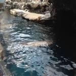 thekumachan_Aquarium_Osaka_Japan-3