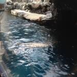 thekumachan_Aquarium_Osaka_Japan-4