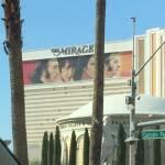 thekumachan_Las_Vegas_Nevada-33
