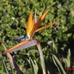 thekumachan_San_Diego_California-003