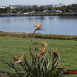 thekumachan_San_Diego_California-010
