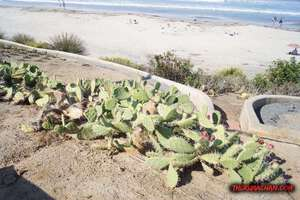 thekumachan_la_jolla_san_diego_california-3