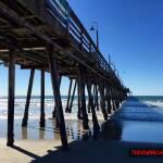 thekumachan_Imperial_Beach_CA-7
