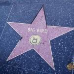 thekumachan_2016_Big_Bird_star