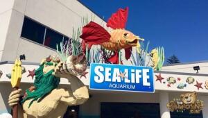 thekumachan_Sea_Life_Aquarium-1
