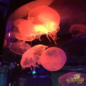 thekumachan_Sea_Life_Aquarium-10