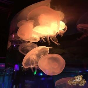 thekumachan_Sea_Life_Aquarium-11