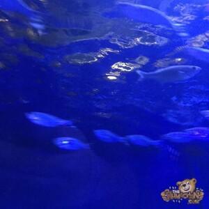 thekumachan_Sea_Life_Aquarium-15