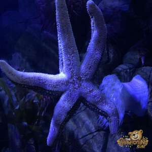 thekumachan_Sea_Life_Aquarium-2