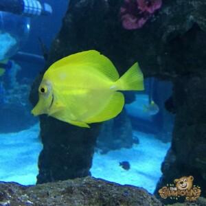 thekumachan_Sea_Life_Aquarium-20