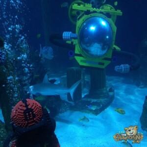 thekumachan_Sea_Life_Aquarium-22