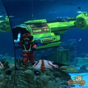 thekumachan_Sea_Life_Aquarium-24