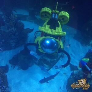 thekumachan_Sea_Life_Aquarium-26
