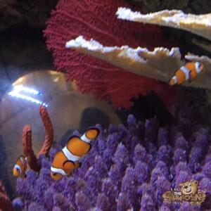 thekumachan_Sea_Life_Aquarium-28