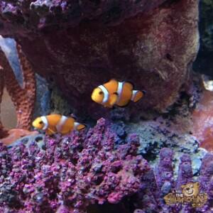 thekumachan_Sea_Life_Aquarium-29