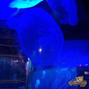 thekumachan_Sea_Life_Aquarium-4