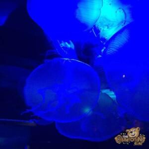 thekumachan_Sea_Life_Aquarium-7