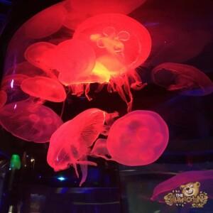 thekumachan_Sea_Life_Aquarium-9