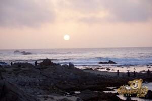 thekumachan_Monterey_California-01