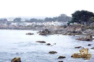 thekumachan_Monterey_California-02