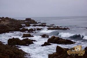 thekumachan_Monterey_California-03