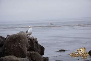 thekumachan_Monterey_California-09