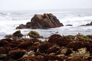 thekumachan_Monterey_California-11