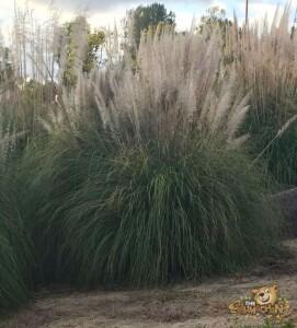 thekumachan_california_vegetation-1
