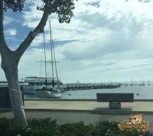thekumachan_living_San_Diego-2