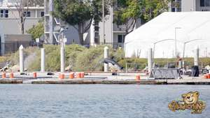 thekumachan_Navy_Dolphins-2