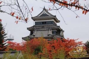 thekumachan_matsumoto_castle-001