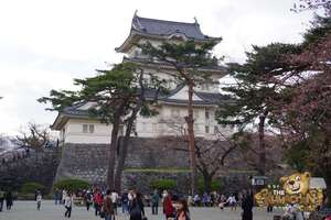 thekumachan_odawara_castle-16