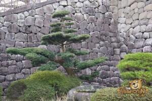 thekumachan_odawara_castle-21