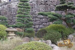 thekumachan_odawara_castle-22