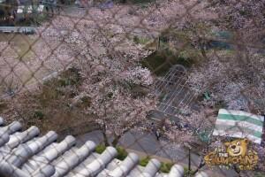 thekumachan_odawara_castle-32