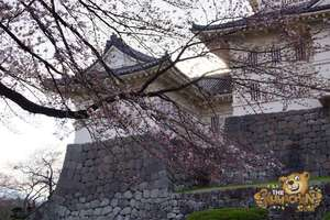 thekumachan_odawara_castle-48