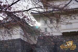 thekumachan_odawara_castle-49