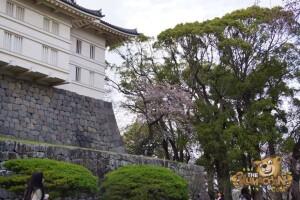 thekumachan_odawara_castle-54