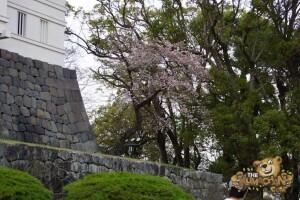 thekumachan_odawara_castle-55
