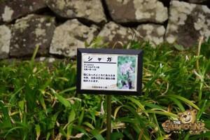 thekumachan_odawara_castle-62