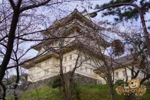 thekumachan_odawara_castle-63