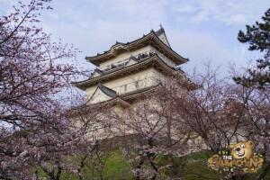 thekumachan_odawara_castle-64