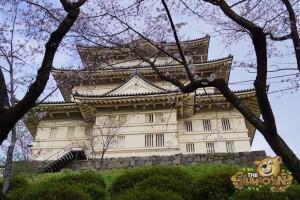 thekumachan_odawara_castle-66