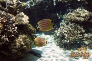thekumachan_okinawa_aquarium-17
