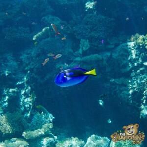 thekumachan_okinawa_aquarium-18