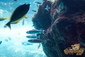 thekumachan_okinawa_aquarium-19