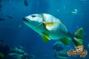 thekumachan_okinawa_aquarium-23