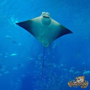 thekumachan_okinawa_aquarium-30