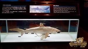 thekumachan_okinawa_aquarium-33