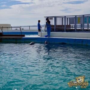 thekumachan_okinawa_aquarium-40